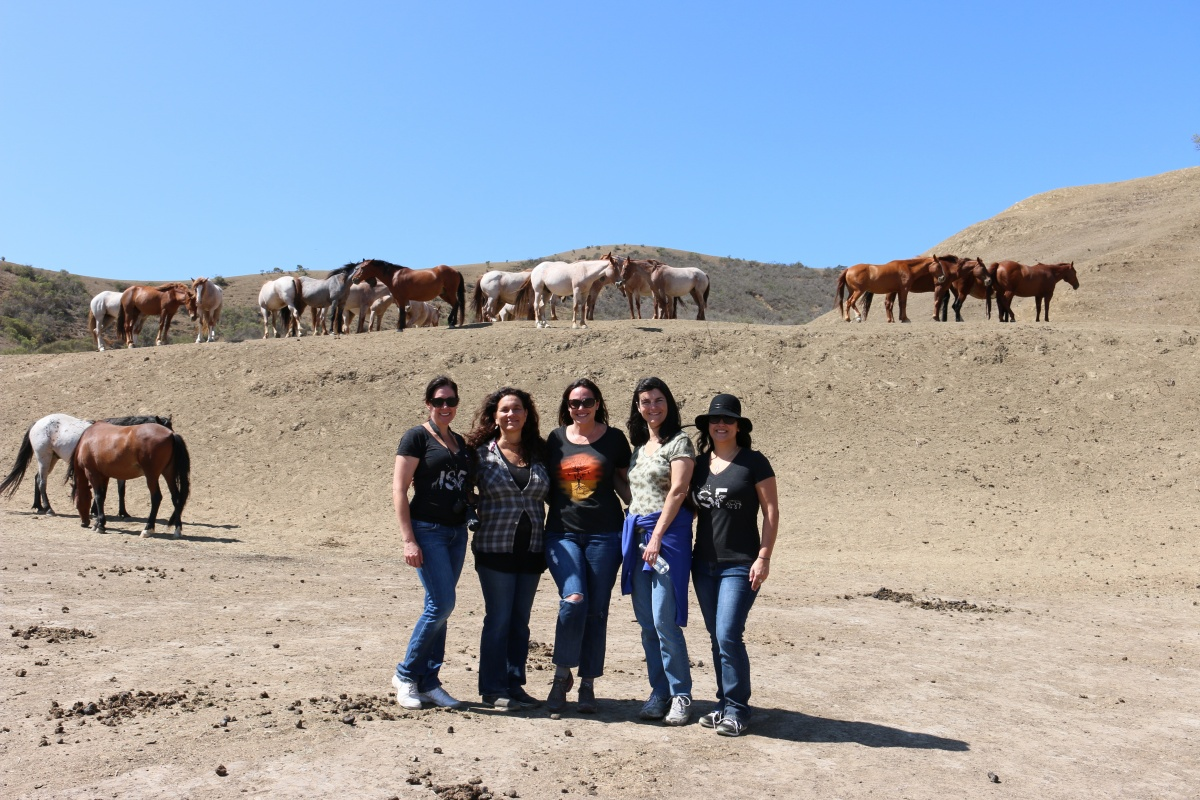 Visiting Return To Freedom Horse Sanctuary